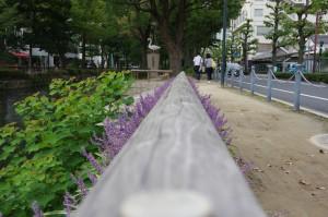 西川緑道公園 歩道