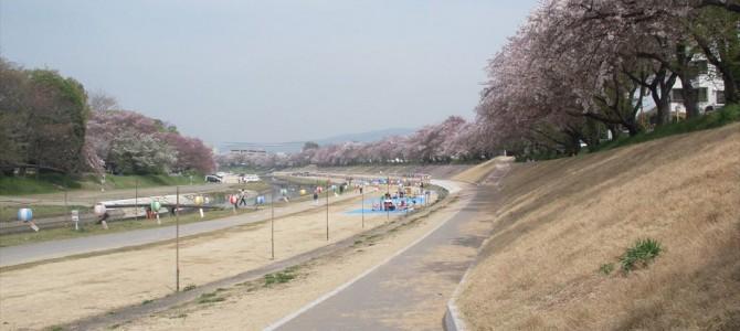 岡山市旭川の桜-2016年4月9日