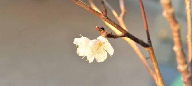 春のベランダ2019